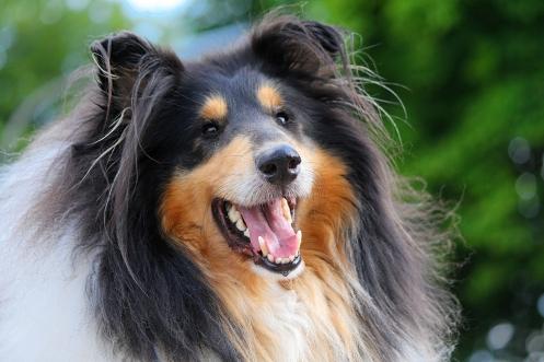 Michael Wieser Wilhelmshaven - Fotografie Portrait Modell Hund