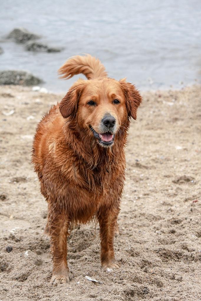Hund012