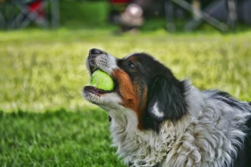 Michael Wieser Wilhemshaven - Fotografie Tiere Hund