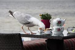 Tiere - Möwen (C) Michael Wieser, Wilhelmshaven - 2014