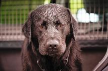 Michael Wieser Wilhelmshaven - Fotografie Portrait Hunde